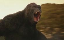 Kong: Đảo đầu lâu vất vả thu hồi vốn