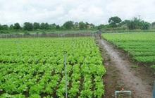 Tỉnh nào sẽ cung cấp rau sạch cho cả vùng ĐBSCL?