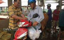 """""""Gia Cát Lượng"""" ương cá giống ở Bắc Giang"""