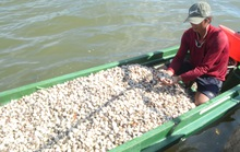 Vụ hải sản chết bất thường: Một số chỉ tiêu vượt ngưỡng cho phép