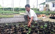 Ẵm vài tỉ đồng mỗi năm nhờ trồng nho giống