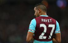 Payet bị chủ tịch West Ham chỉ trích