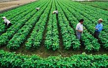 Gỡ khó cho đầu tư nông nghiệp, nông thôn