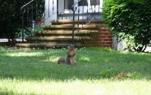 Cảm nghĩ về con sóc nhỏ ở Mỹ!
