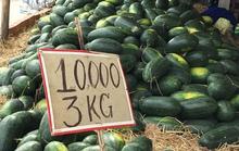 Khuyến nông tốt, sản lượng nhiều nhưng không biết bán ở đâu!