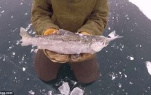Cá lớn hóa đá khi đang nuốt cá bé