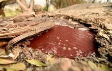Dòng sông rượu vang sôi sùng sục sau cháy rừng ở California