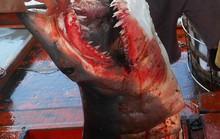 Cuộc 'cân não' với cá mập ở Hoàng Sa