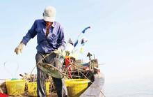 Săn ốc cà na trên biển Gò Công