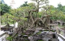 """""""Vi hành"""" làng cây cảnh thế khủng, cực chất"""