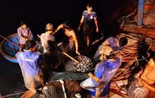 Bí kíp dụ cá có 1 không 2 của 1 ngư dân Quảng Ngãi