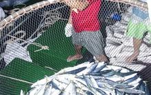 Theo ngư dân xem cá nhảy giữa biển Đông