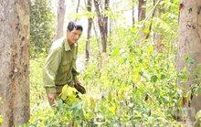 Khu rừng được bảo vệ nghiêm ngặt ở Gia Lai