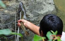 Săn cá 'đặc sản' ở  Nghệ An