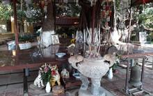 Đến xem cây đa cổ thụ có 13 gốc ở Hải Phòng