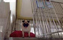 Khách sạn cho thú cưng dịp Tết giá nửa triệu đồng/ngày