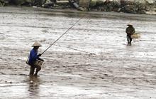 Về Hải Phòng lác mắt với nghề câu cá lác