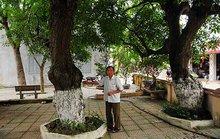 Bí mật về 4 cụ cây 700 tuổi ở Đồng Tâm