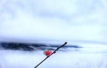 Biển mây Tà Xùa, chuyến đi Tây Bắc cho 2 ngày cuối tuần