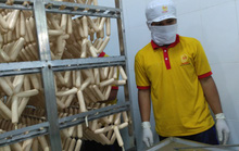 Vụ đùn đẩy cấp phép kiểm dịch thịt động vật: Cơ quan thú y tạm đảm trách