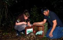 93 con tê tê quý hiếm được thả về rừng