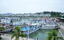 Tàu du lịch bị đắm trong âu cảng quốc tế Tuần Châu