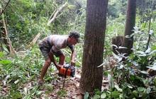 Trắng đen vụ phá rừng ở Phú Yên sẽ rõ vào tháng 4-2017
