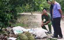 Khởi tố 3 đối tượng trộm cắp sầu riêng khiến 2 người tử vong