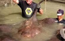 Bị bắt vì tiếp tay cho du khách bắt cá đuối hiếm
