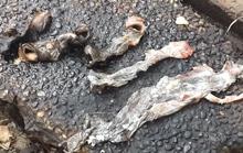 Vạch mặt bí quyết hô biến thịt lợn thành đặc sản thú rừng