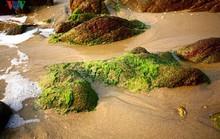 Ngắm vẻ đẹp của bãi biển hoang sơ dưới chân đèo Ngang