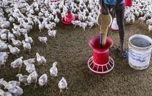 Thảm họa lạm dụng kháng sinh