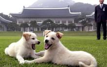 Ông Kim Jong-un tặng chó săn cho tổng thống Hàn Quốc