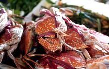 Thiên đường hải sản tươi rói ở chợ ngoại ô Sài Gòn