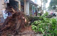 Lốc xoáy tại Đồng Nai khiến nhà tốc mái, cây xanh bật gốc
