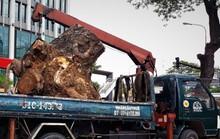 Đường đi của các loại cây xanh bị đốn hạ ở TP HCM