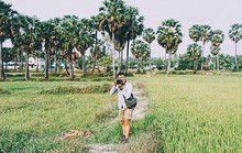 Vì sao cây thốt nốt hấp dẫn khách đến An Giang