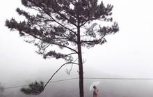 """Dân du lịch háo hức """"check-in"""" cây thông độc đáo ở Đà Lạt"""