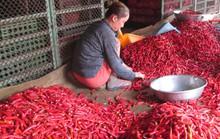 Malaysia dừng nhập khẩu ớt từ Việt Nam