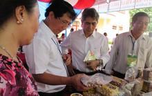 Trồng điều hữu cơ tại Campuchia để xuất khẩu