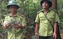 Kinh hãi dày đặc hơn 300 bẫy tận diệt thú rừng trên núi