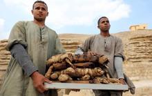 Phát hiện mẻ xác ướp lạ bên trong khu mộ cổ ở Saqqara