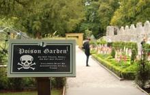 Khám phá khu vườn trồng hơn 100 loài cây độc chết người