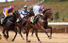Hà Nội muốn xây tổ hợp trường đua ngựa 500 triệu USD