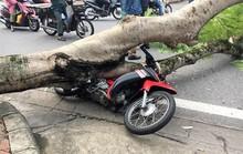 Cây xanh bật gốc, ngã đè xe máy người đi đường