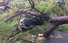 Ảnh hưởng bão số 9: TP HCM mưa lớn, cây gãy đổ đè chết người đi đường