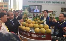 Thủ tướng Nguyễn Xuân Phúc khen ngợi bưởi Phúc Trạch