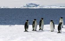 Đáng lo số phận Nam Cực
