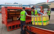 Ném gói hàng, 2 nhân viên bốc xếp ở sân bay Tân Sơn Nhất bị sa thải