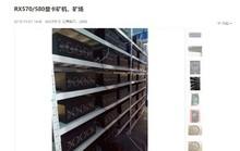 Làn sóng bán tháo trâu cày trên thị trường đào tiền ảo